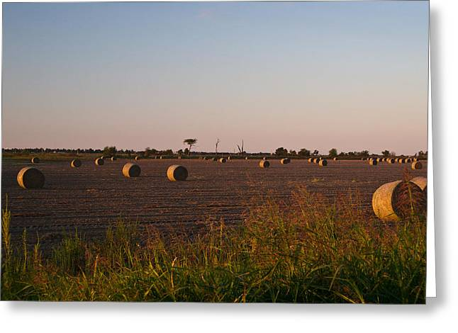 Bales in Peanut Field 6 Greeting Card by Douglas Barnett