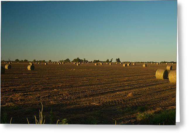 Bales In Peanut Field 9 Greeting Card by Douglas Barnett