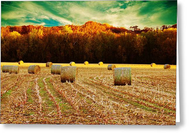 Tree Lines Digital Greeting Cards - Bales of Autumn Greeting Card by Bill Tiepelman