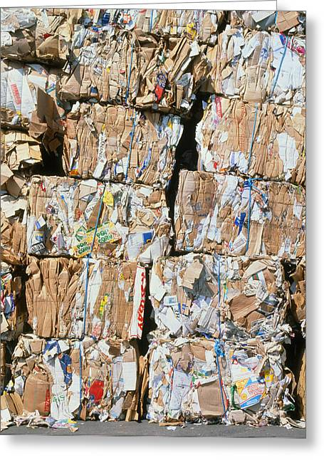 Cardboard Greeting Cards - Bales Of Carboard And Paper For Recycling Greeting Card by David Parker