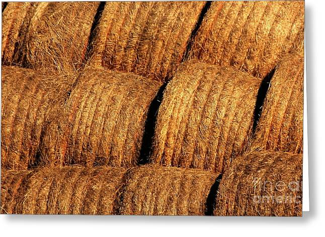 Bale Greeting Cards - Bales of Golden Hay Greeting Card by Marjorie Imbeau