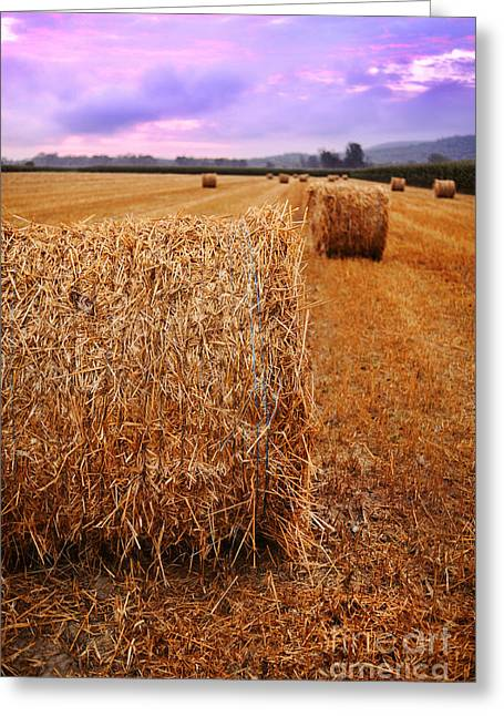 Sunrise Greeting Cards - Bales Of Hay At Sunrise Greeting Card by HD Connelly