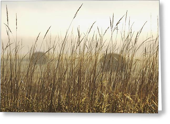 Foggy Day Greeting Cards - Bales Of Hay In A Field In The Fog Greeting Card by Susan Dykstra