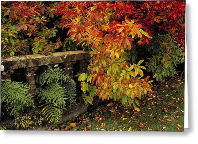 Statuary Garden Greeting Cards - Balustrades & Autumn Colours Greeting Card by The Irish Image Collection