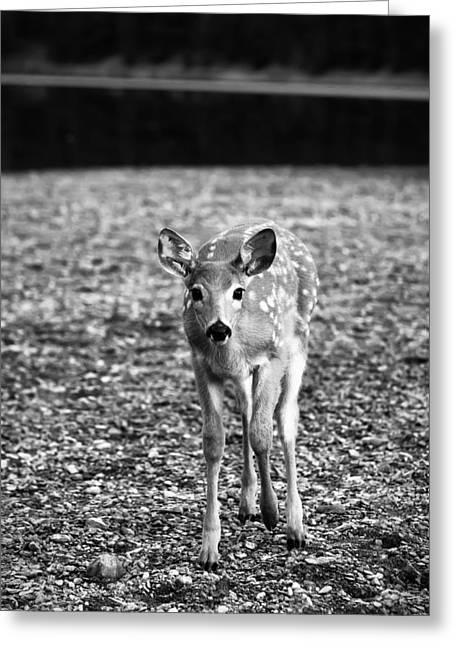 Waiting Greeting Cards - Bambi in Black and White Greeting Card by Sebastian Musial