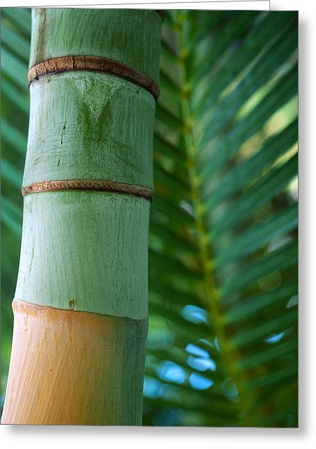 Plant Framed Prints Greeting Cards - Bamboo And Fern Greeting Card by Kathy Yates
