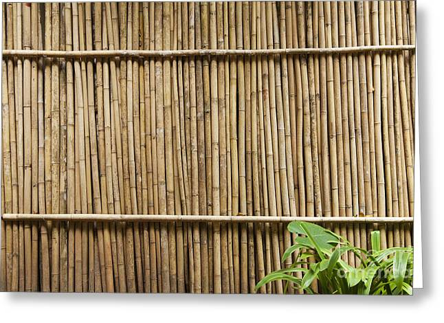 Recently Sold -  - Bamboo Fence Greeting Cards - Bamboo Fence Greeting Card by Don Mason