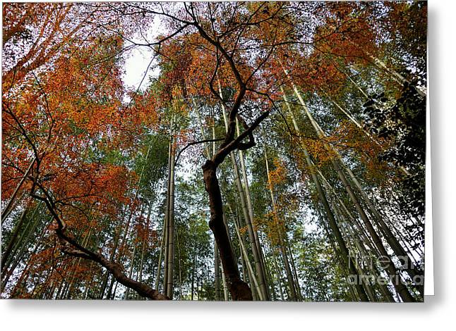 Kyoto Greeting Cards - Bamboo forest in Autumn Greeting Card by Dean Harte