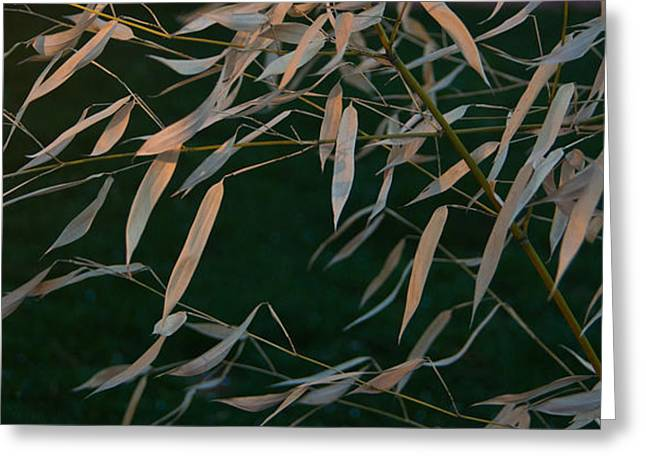 Bamboo Wall Greeting Cards - Bamboo Leaves in the Wind Greeting Card by Douglas Barnett