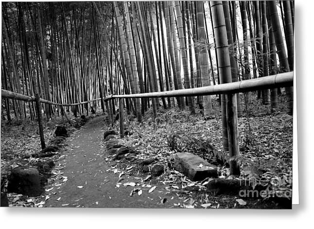 Kamakura Greeting Cards - Bamboo Path Greeting Card by Dean Harte