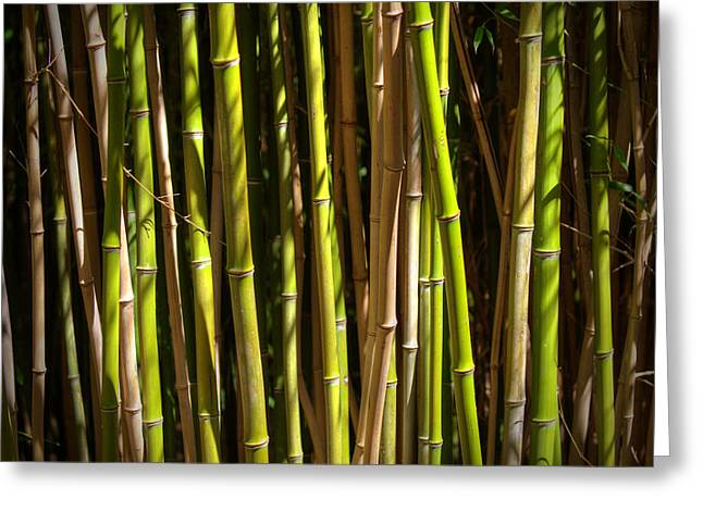 Outdoor Life Art Prints Greeting Cards - Bamboo Greeting Card by Ricky Barnard