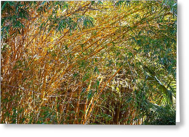 Tree Jewelry Greeting Cards - Bamboo Stand please buy me Greeting Card by Michael Clarke JP