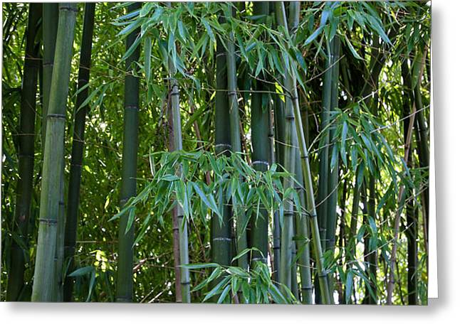 Bamboo Tree Greeting Card by Athena Mckinzie