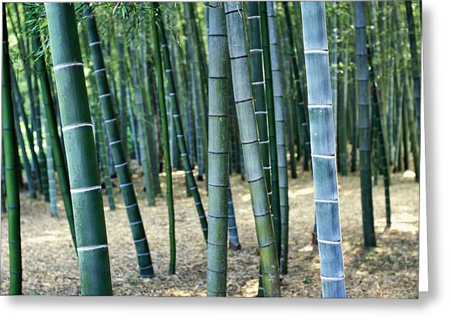 Forest Detail Greeting Cards - Bamboo Tree Forest, Close Up Greeting Card by Axiom Photographic