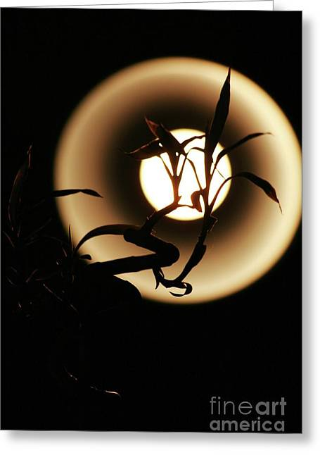 Bamboo Pyrography Greeting Cards - Bamboos Moon Greeting Card by Jonny Bean