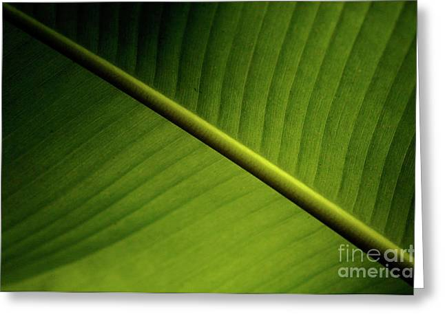 Wind Surfer Greeting Cards - Banana Leaf 2 Greeting Card by Bob Christopher