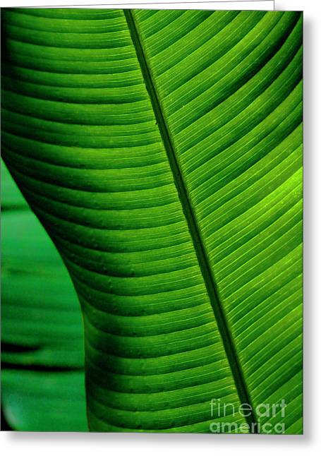 Wind Surfer Greeting Cards - Banana Leaf Greeting Card by Bob Christopher
