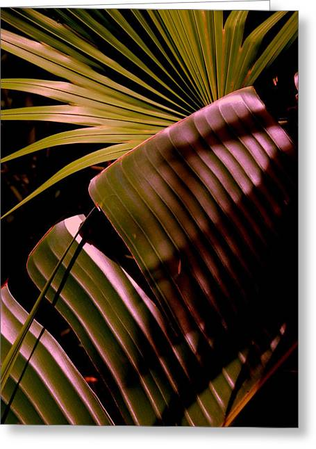 Banana Plants Greeting Cards - Banana Leaf Greeting Card by Susanne Van Hulst