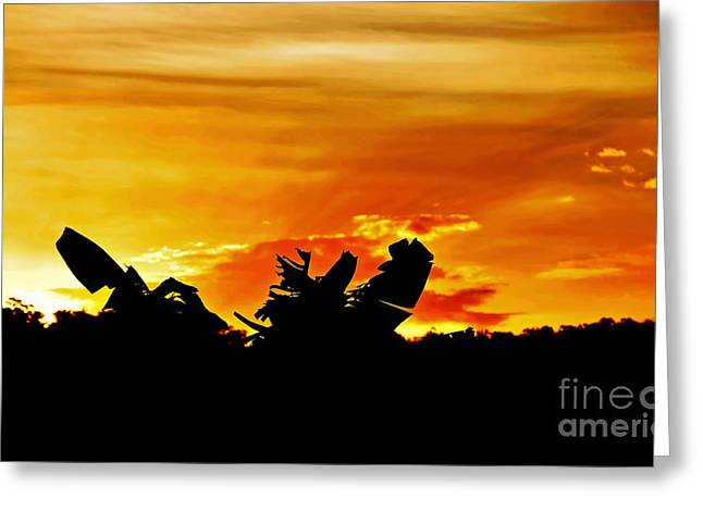 Colorful Cloud Formations Greeting Cards - Banana Palm Sunset Greeting Card by Kaye Menner