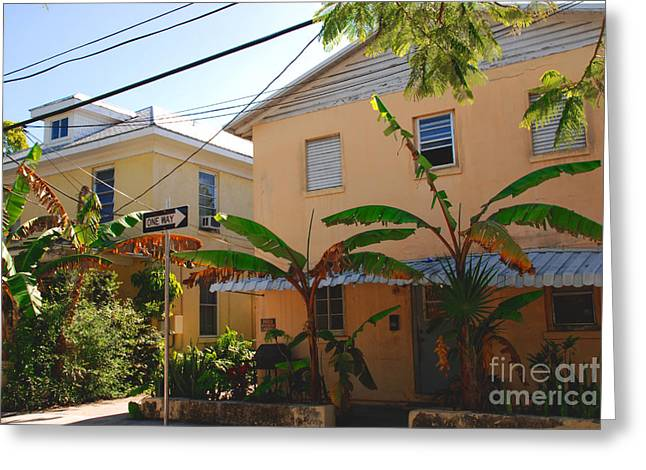 Banana Plants Greeting Cards - Banana Tree Lane in Key West Greeting Card by Susanne Van Hulst