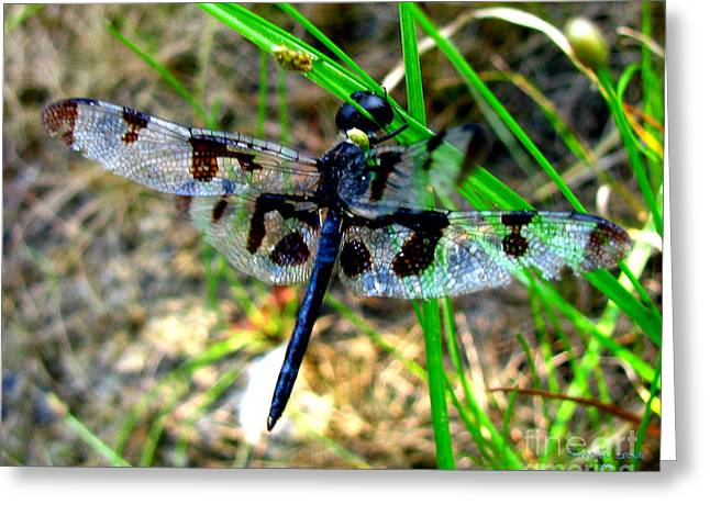 Banded Pennant Dragonfly Greeting Card by Donna Brown