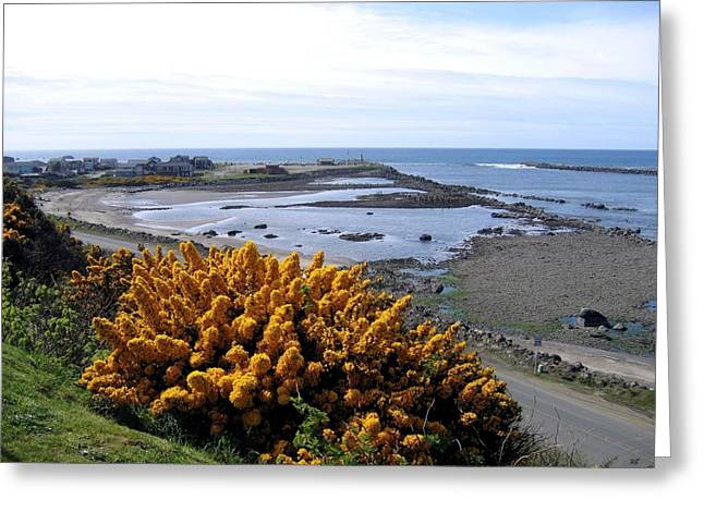 Charming Vistas Greeting Cards - Bandon Harbor Entrance Greeting Card by Will Borden