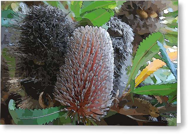 Proteaceae Greeting Cards - Banksia group Greeting Card by Fran Woods
