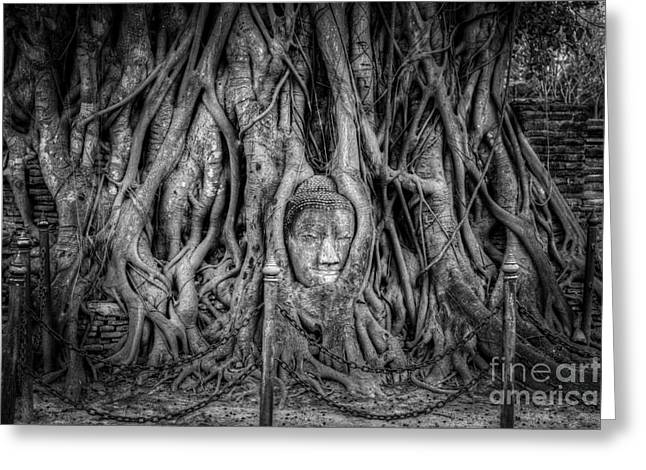Ayutthaya Greeting Cards - Banyan Tree Greeting Card by Adrian Evans
