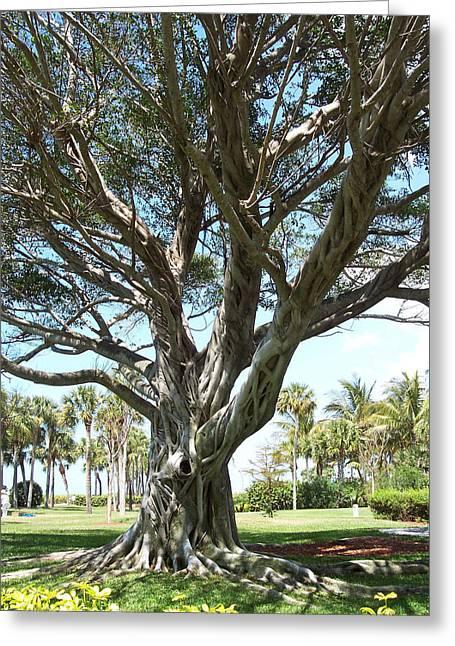 Anna Villarreal Garbis Greeting Cards - Banyan Tree Greeting Card by Anna Villarreal Garbis