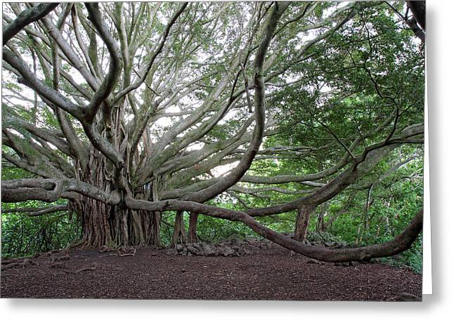 """""""banyan Tree"""" Greeting Cards - Banyan tree Greeting Card by Pierre Leclerc Photography"""