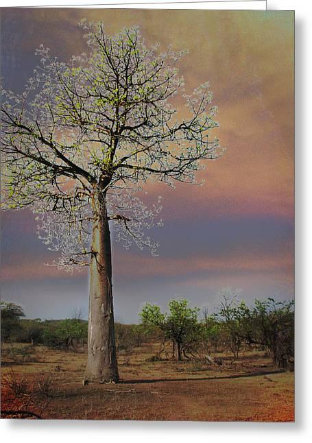 Baobab Greeting Cards - Baobab  Greeting Card by Joseph G Holland