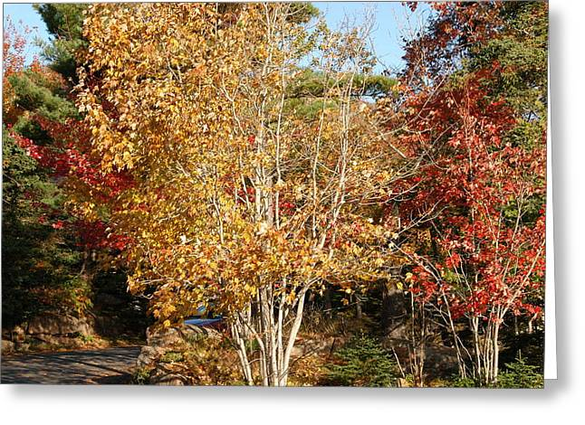 Leaf Peepers Greeting Cards - Bar Harbor Colors Greeting Card by Sandy Varco