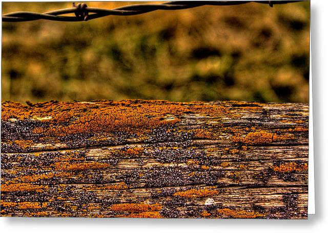 Barbed Wire Fences Greeting Cards - Barbed Fence Greeting Card by David Patterson