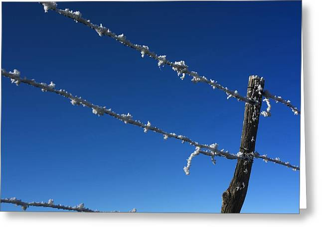 Wooden Stake Greeting Cards - Barbed wire Greeting Card by Bernard Jaubert