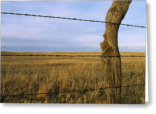 Barbed Wire Fence Along Dry Creek Road Greeting Card by Gordon Wiltsie