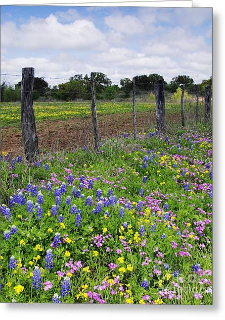 Old Fence Posts Greeting Cards - Barbed Wire Fence With Wildflowers in Foreground Greeting Card by Jeremy Woodhouse