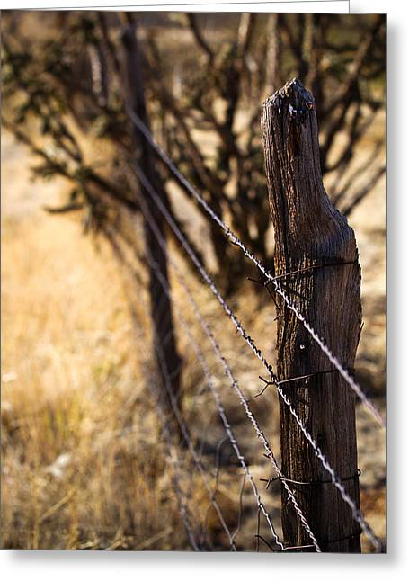 Jason Smith Greeting Cards - Barbed Wire Greeting Card by Jason Smith
