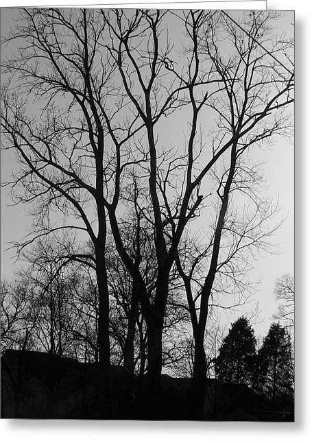 Bare Trees Greeting Cards - Bare Limbs Greeting Card by Vijay Sharon Govender