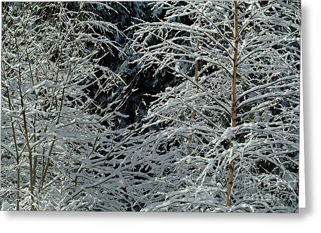 Bare Trees Greeting Cards - Bare tree branches covered in snow Greeting Card by Sami Sarkis