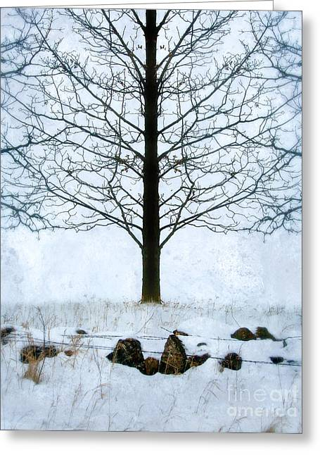 Winter Scenes Rural Scenes Greeting Cards - Bare Tree in Winter Greeting Card by Jill Battaglia