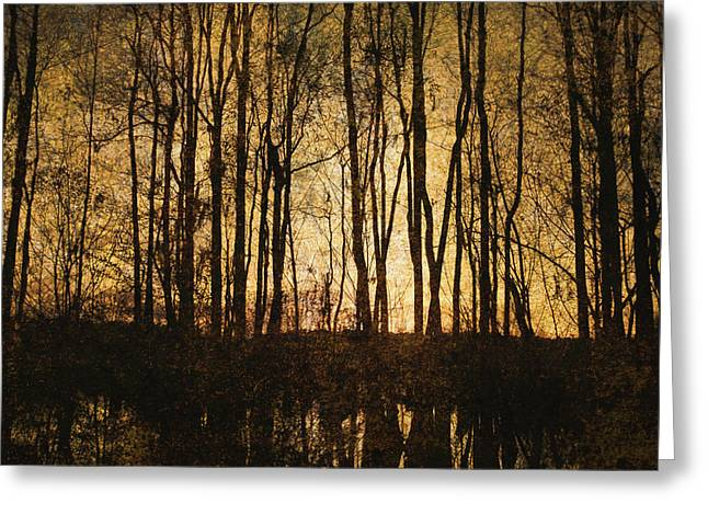 Brown Toned Art Greeting Cards - Bare Trees 3 Greeting Card by Skip Nall