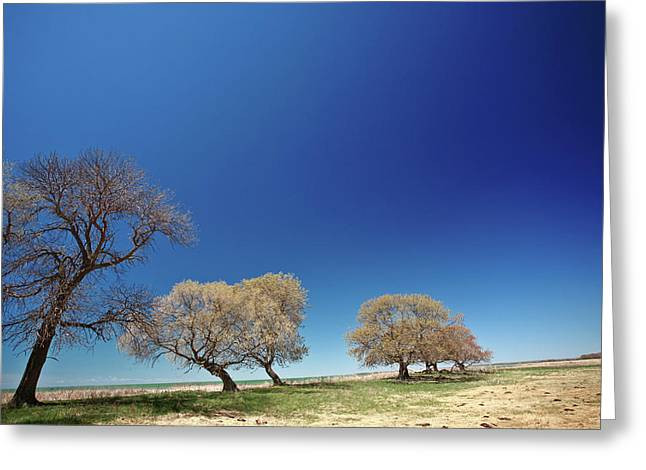 Bare Trees Greeting Cards - Bare trees along shore of Lake Manitoba Greeting Card by Mark Duffy
