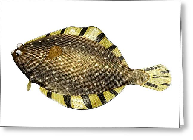 Black Greeting Cards - Barfin Flounder Greeting Card by Koji