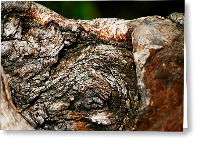 Interiors Greeting Cards - Bark Greeting Card by Christopher Gaston