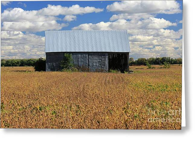 Old Barns Greeting Cards - Barn and Land Greeting Card by Sophie Vigneault