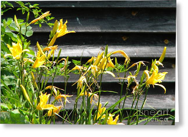 Day Lilly Greeting Cards - Barn and Lillies Greeting Card by Elizabeth Coats
