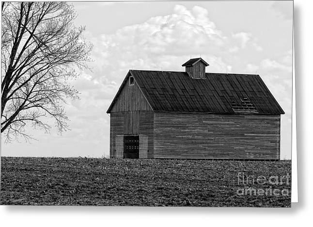 Alan Look Greeting Cards - Barn and Tree in Black and White Greeting Card by Alan Look