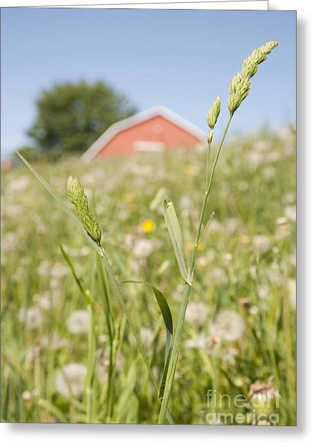 Recently Sold -  - Close Focus Nature Scene Greeting Cards - Barn On a Grass Slope Greeting Card by Shannon Fagan