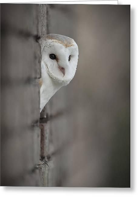 Andy Astbury Greeting Cards - Barn Owl Greeting Card by Andy Astbury