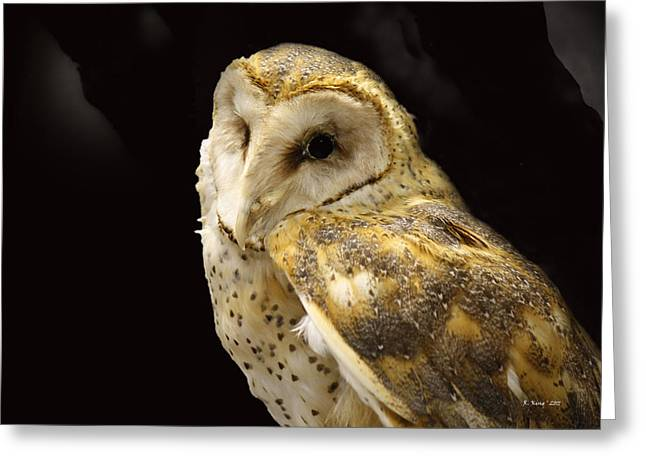Secretive Birds Greeting Cards - Barn Owl In A Dark Tree Greeting Card by Roena King